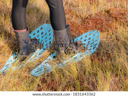 picture with bog shoes and boots on a background of traditional peat swamp vegetation, painted in autumn, grass, moss covers the ground