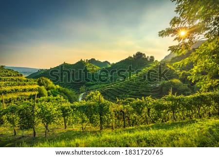 Prosecco Hills, vineyards at sunset. Unesco Site. Farra di Soligo. Veneto, Italy, Europe. Royalty-Free Stock Photo #1831720765