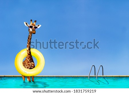 Funny photo of giraffe stand with inflatable doughnut in swimming pool over sky on summer resort