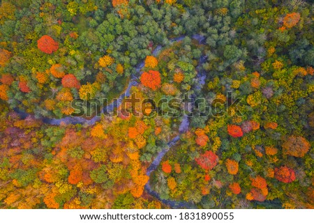 Drone view of colorful tree tops, Lithuania