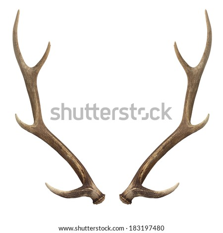 Deer antlers. Isolated on white Royalty-Free Stock Photo #183197480
