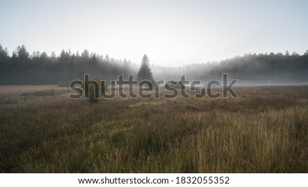 moor landscape in the fog in the landscape protection area The nature reserve Kirchspielwald-Ibacher Moos in southern germany,  is a significant moor area nationwide with numerous endangered animal an Royalty-Free Stock Photo #1832055352