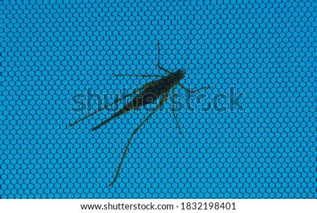Grasshopper on the window web