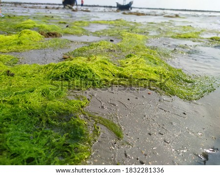 That's located on Saint Martin island. In this picture we see the green sea weeds which was traped in shoreline of beach