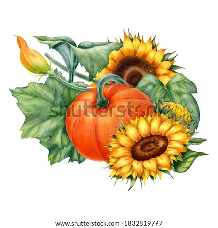 Watercolor illustration with pumpkins and sunflowers isolated on the white background.Hand painted watercolor clipart.