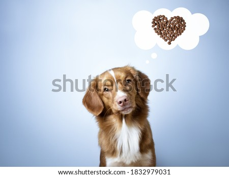 Adorable nova scotia duck tolling retriever dog thinking about food, speech bubble, blue background, cartoon, dry food