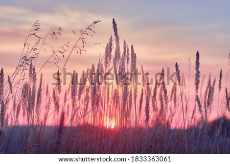 Sunrise in field. beautiful panorama rural landscape with fog, sunrise and blossoming meadow. wild flowers blooming on Sunrise. Samara, Russia.