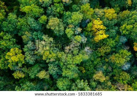 aerial top down view of a green forest, drone view, natural green background Royalty-Free Stock Photo #1833381685