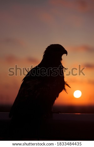 A picture combining the falcon and the sunset