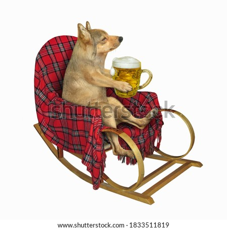 A beige dog is sitting in a rocking chair and drinking beer. White background. Isolated.