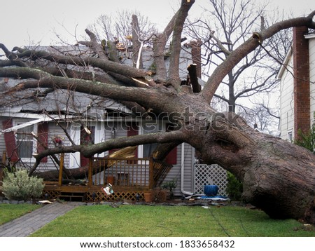 A large tree lays on top of a house in the aftermath of a hurricane. Royalty-Free Stock Photo #1833658432