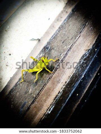 Close up picture of grasshopper