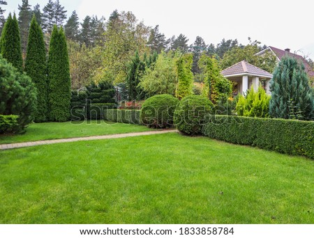 Landscaping of a garden with a bright green lawn, colorful shrubs, decorative evergreen plants and shaped boxwood (Buxus Sempervirens) in autumn. Gardening concept. Royalty-Free Stock Photo #1833858784