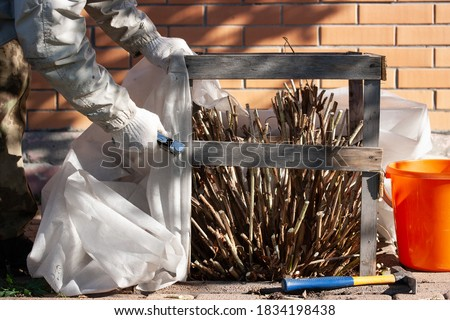 Warming hydrangeas with a covering material before winter frosts Royalty-Free Stock Photo #1834198438