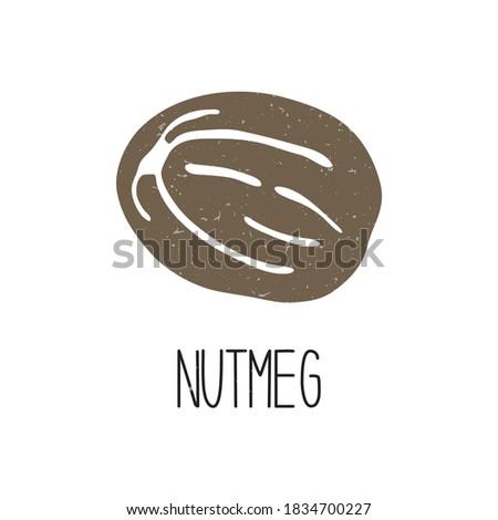 Cute caption nutmeg isolated on white background. Spice pictogram original design. Vector shabby hand drawn illustration Royalty-Free Stock Photo #1834700227
