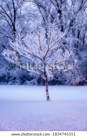 I have been waiting for the next snowfall to be able to take pictures while snow is sill on the tree. Photo taken 6:17am at the start of the blue hour.
