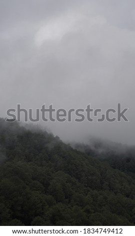 fog is water vapor near the ground that condenses and becomes cloud-like #1834749412