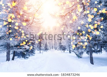 Winter fir tree christmas scene with sunlight. Fir branches covered with snow. Christmas winter blurred background with garland lights, holiday festive background.  Royalty-Free Stock Photo #1834873246
