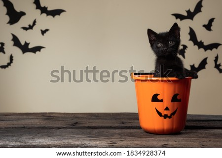Writeable Halloween consept. Adorable black kitten sitting in halloween trick or treat bucket looking into the camera on palomino background with black bats. #1834928374