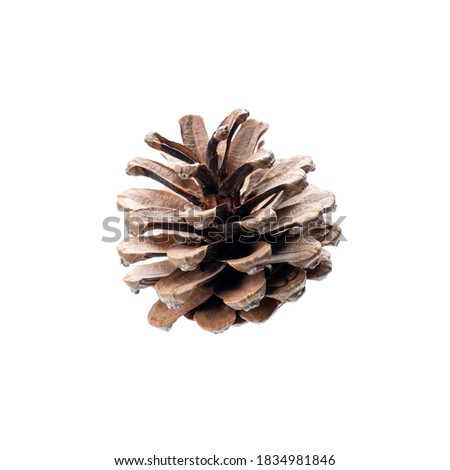 conifer cone isolated on a white background. pine cone for christmas decoration. Royalty-Free Stock Photo #1834981846