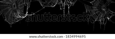 Real creepy spider webs hanging on black banner