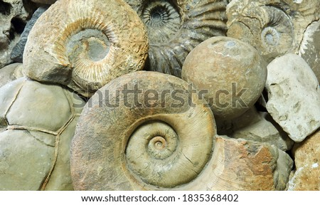 background - ammonite shells, concretions and other paleontological and geological specimens are heaped Royalty-Free Stock Photo #1835368402
