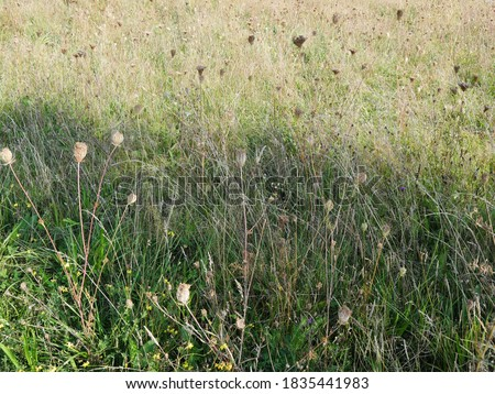 View of a meadow with multitude of different wild herbs, are noticeable  wild carrots with their dry conditions, which tend to ripen in cone rays like a bird's nest, are also very popular in floristry Royalty-Free Stock Photo #1835441983