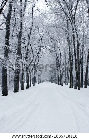 Road covered in snow in winter park, vertical picture