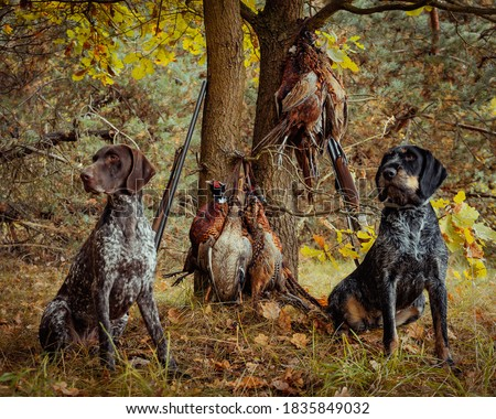hunting pheasants the hunt was successful for Hey - Zani Royalty-Free Stock Photo #1835849032