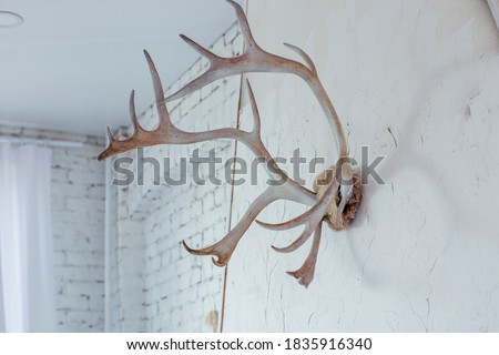 Interior decoration - deer antlers on the wall. Scandinavian style in the house. Comfort in the house.White brick wall Royalty-Free Stock Photo #1835916340