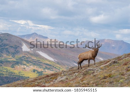 wild elk in the west. Royalty-Free Stock Photo #1835945515