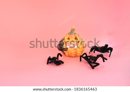 Halloween and automne background with pumpkin with big smile and black toy spiderman on  pink background and space for write text , decorate  or inviting halloween concept.