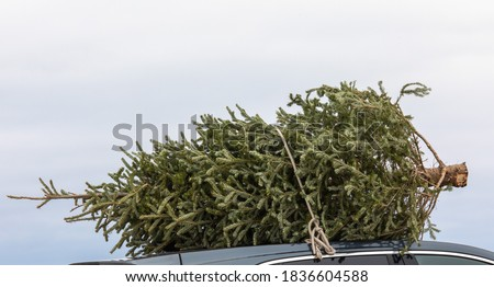 Bringing home the Christmas tree tied to the roof of the car #1836604588