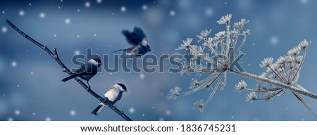 cute birds in winter time  Royalty-Free Stock Photo #1836745231