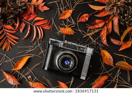 Retro photo camera on black background with red fall rowan and cherry leaves, pine cones and needles