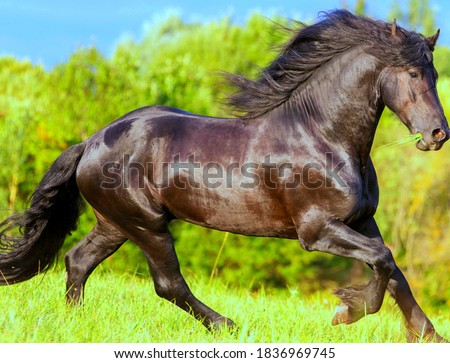 A picture of the beautiful view of horse with blurred background