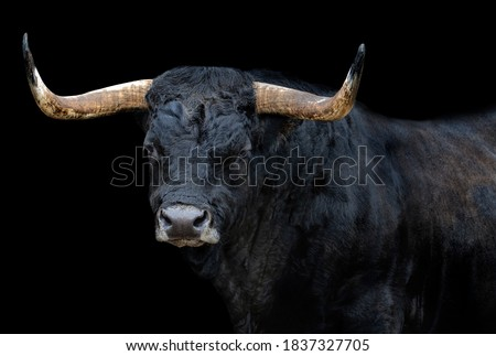 Portrait of a bull with black background Royalty-Free Stock Photo #1837327705