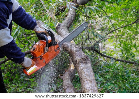 Broken the trunk tree after a hurricane of man is cutting a tree with a chainsaw Royalty-Free Stock Photo #1837429627