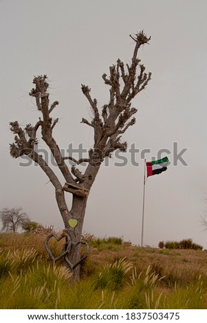 A unique photograph of a dry tree with the UAE flag