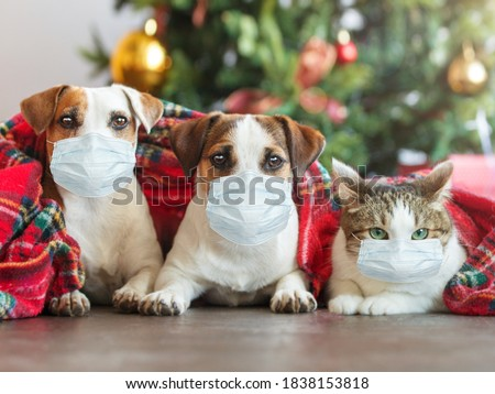 Cat and dogs under a christmas tree. Pets under plaid in mask. Coronavirus covid 19 #1838153818