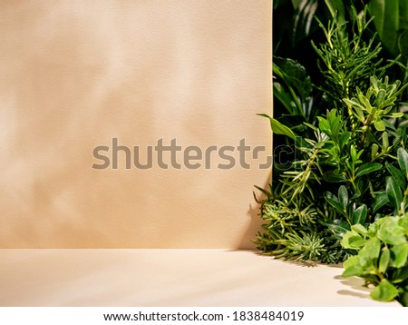 Minimalist botanical background with copy space. Neutral toned showcase for new product demonstration, promotion sale, packaging presentation, cosmetic or merchandise. Light and shadow. Front view. Royalty-Free Stock Photo #1838484019