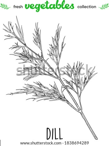 Dill. Detailed line art. Freehand drawing. Vector vegetables. Collection of fresh vegetables. Royalty-Free Stock Photo #1838694289