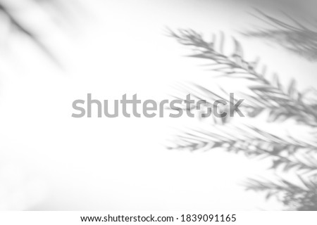 Blurred overlay effect for photo. Gray shadows of fir tree branches on a white wall. Abstract neutral nature concept background for design presentation. Shadows for natural light effects #1839091165