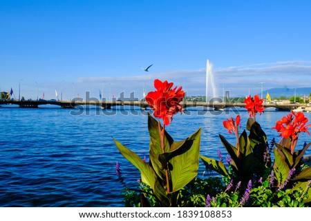 Geneva lake with bridge and Red Canna Indica lily flower on foreground of picture.