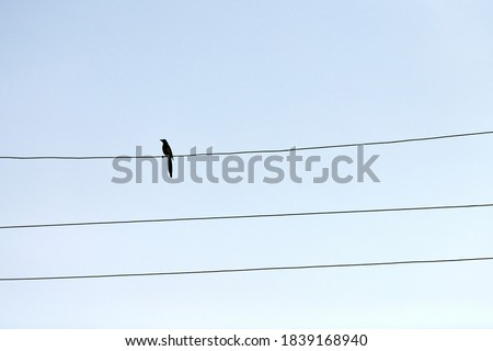 One alone bird on wire. Loneliness concept. Outsider self-isolation Royalty-Free Stock Photo #1839168940