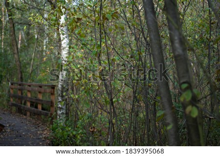 A defocused picture of the trees growing by a wooden track. Kampinos National Park in the autumn, Warsaw, Poland.