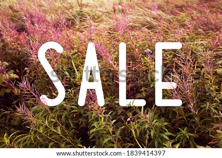 Sale discount design background with autumn plants. Autumn / fall / spring sale banner.