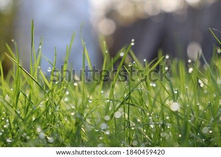 The radiance of morning dew on the grass lawn Royalty-Free Stock Photo #1840459420