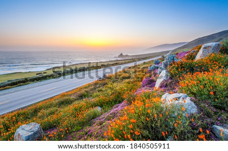 wild flowers and California coastline in Big Sur at sunset Royalty-Free Stock Photo #1840505911