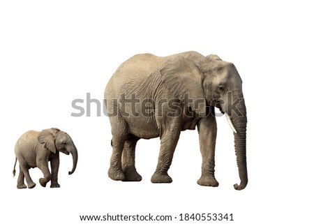 African Elephant female with baby isolated on white background, graphic object Royalty-Free Stock Photo #1840553341
